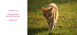 Découvrez les bénévoles de l'asbl Cat's Cocoon de Mouscron