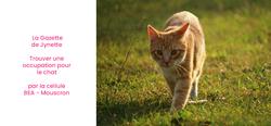 L'isolement du COVID-19 et nos chats : que faire ?
