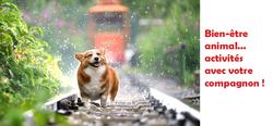L'isolement du COVID-19 et nos chiens : que faire ?