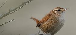 Rétrospective Biodiversité à Mouscron 2019