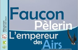 Archives - Faucon